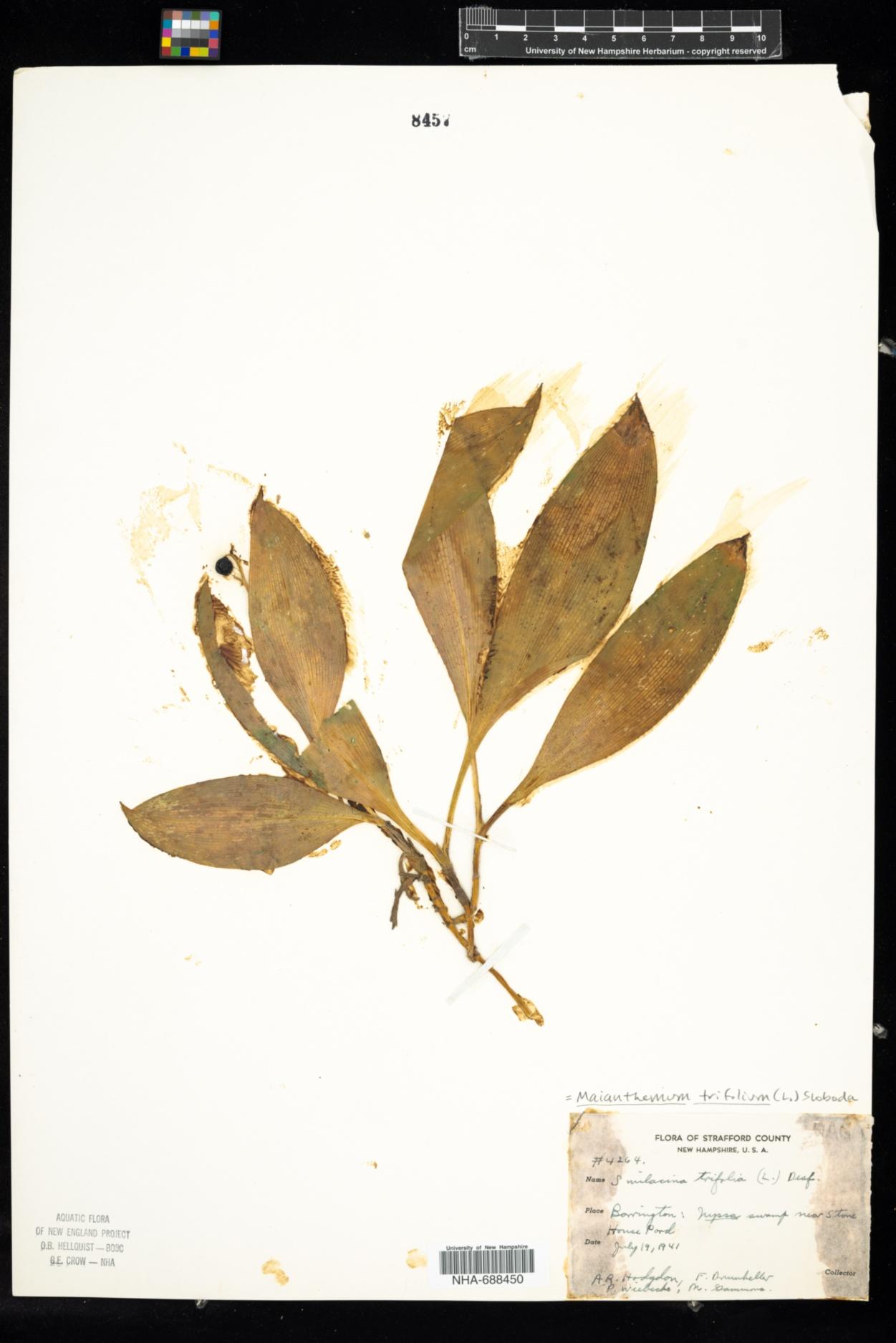 Asparagaceae image