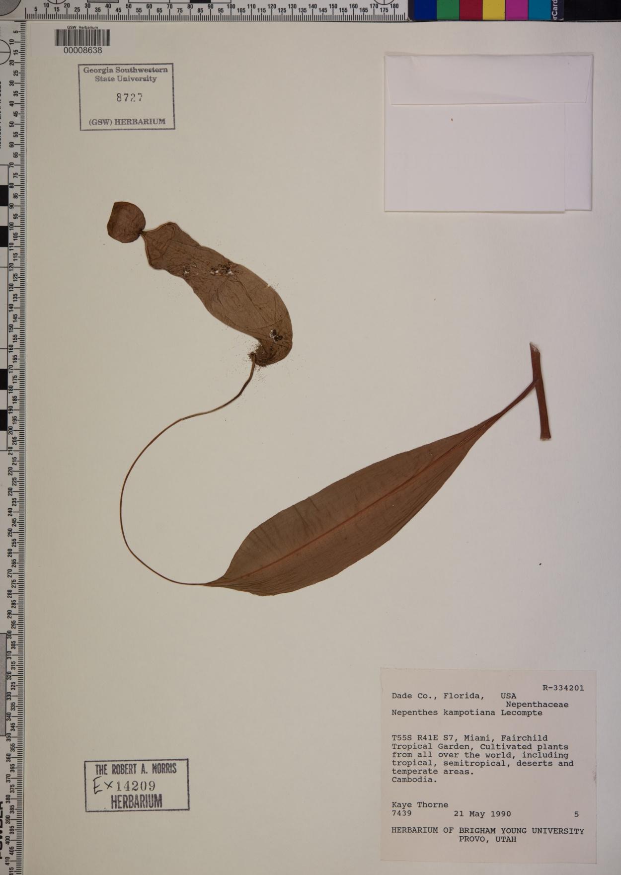Nepenthes kampotiana image