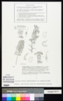 Prosopis denudans image