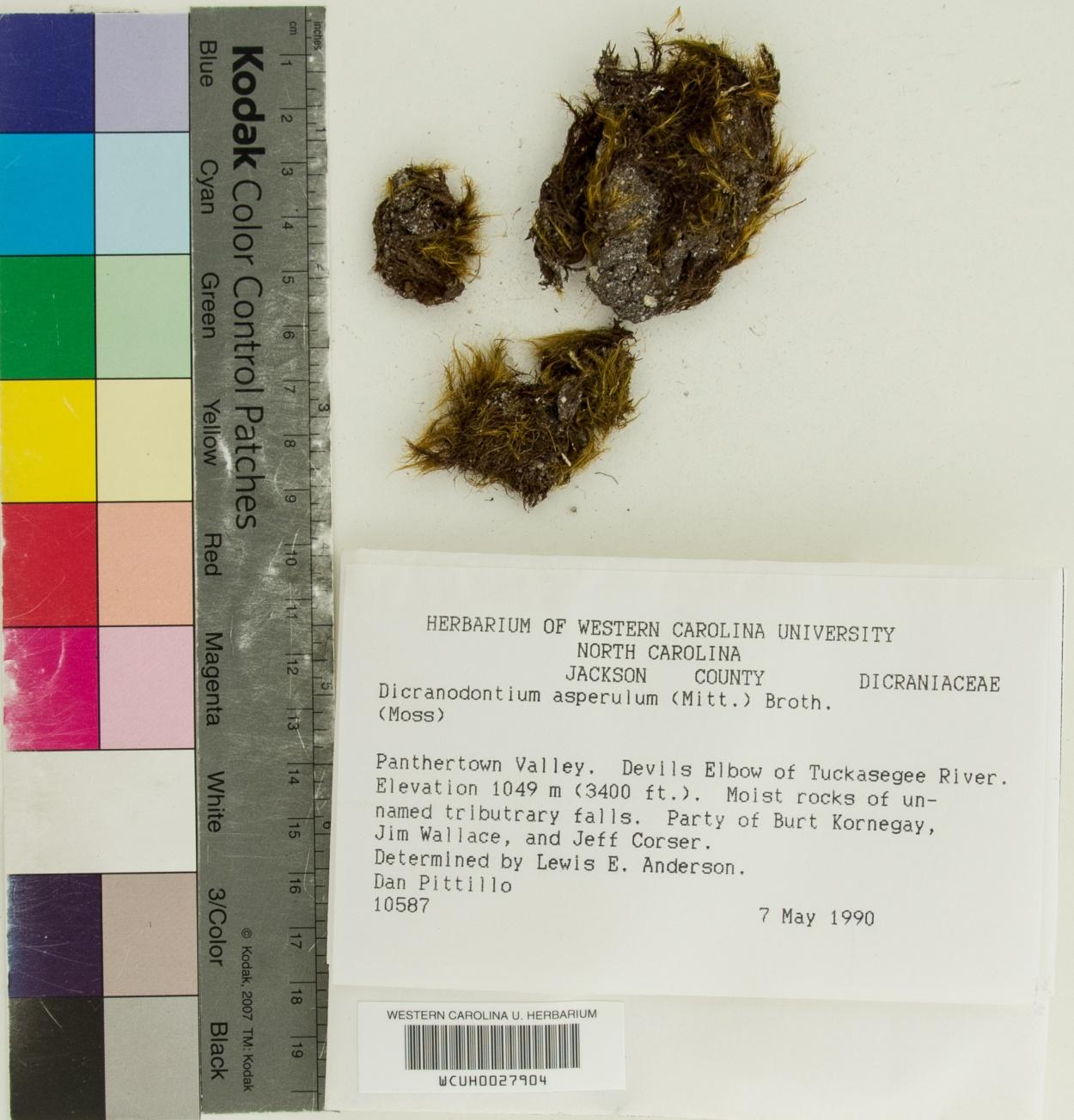 Dicranodontium image