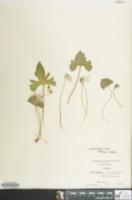 Image of Viola triloba