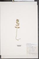 Clinopodium vulgare image