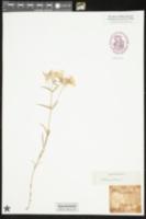 Catalog #103125