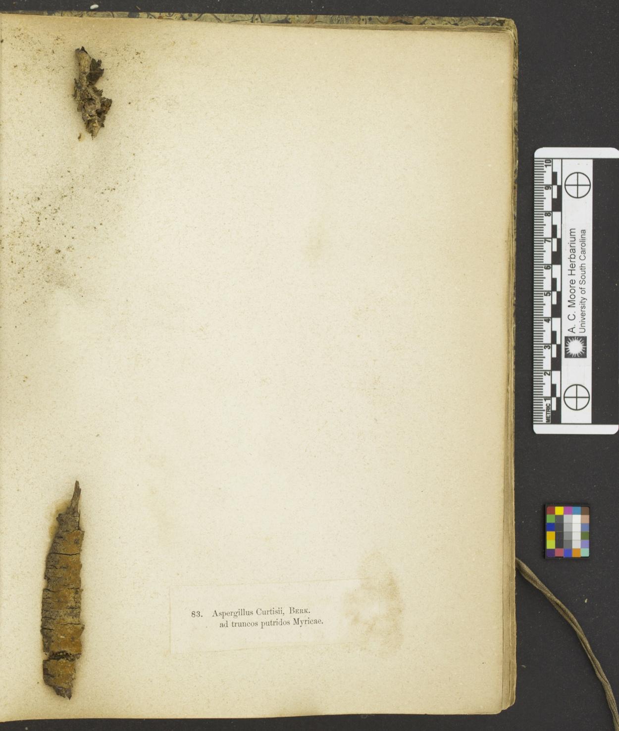Haplotrichum curtisii image