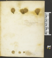 Lycoperdon pusillum image