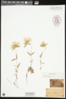 Catalog #103128