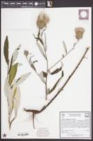 Cirsium virginianum image