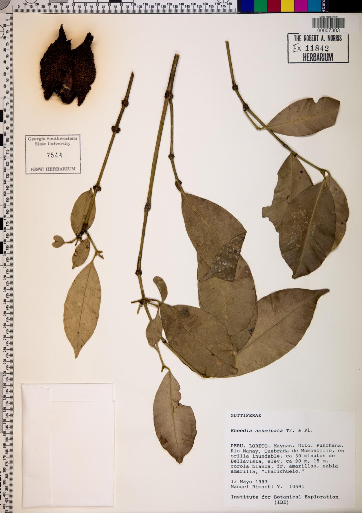 Rheedia acuminata image