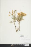 Image of Heterotheca falcata