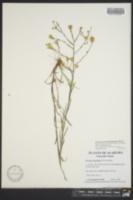 Image of Heterotheca adenolepis