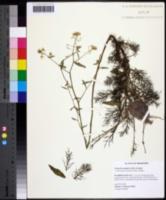 Neobeckia aquatica image