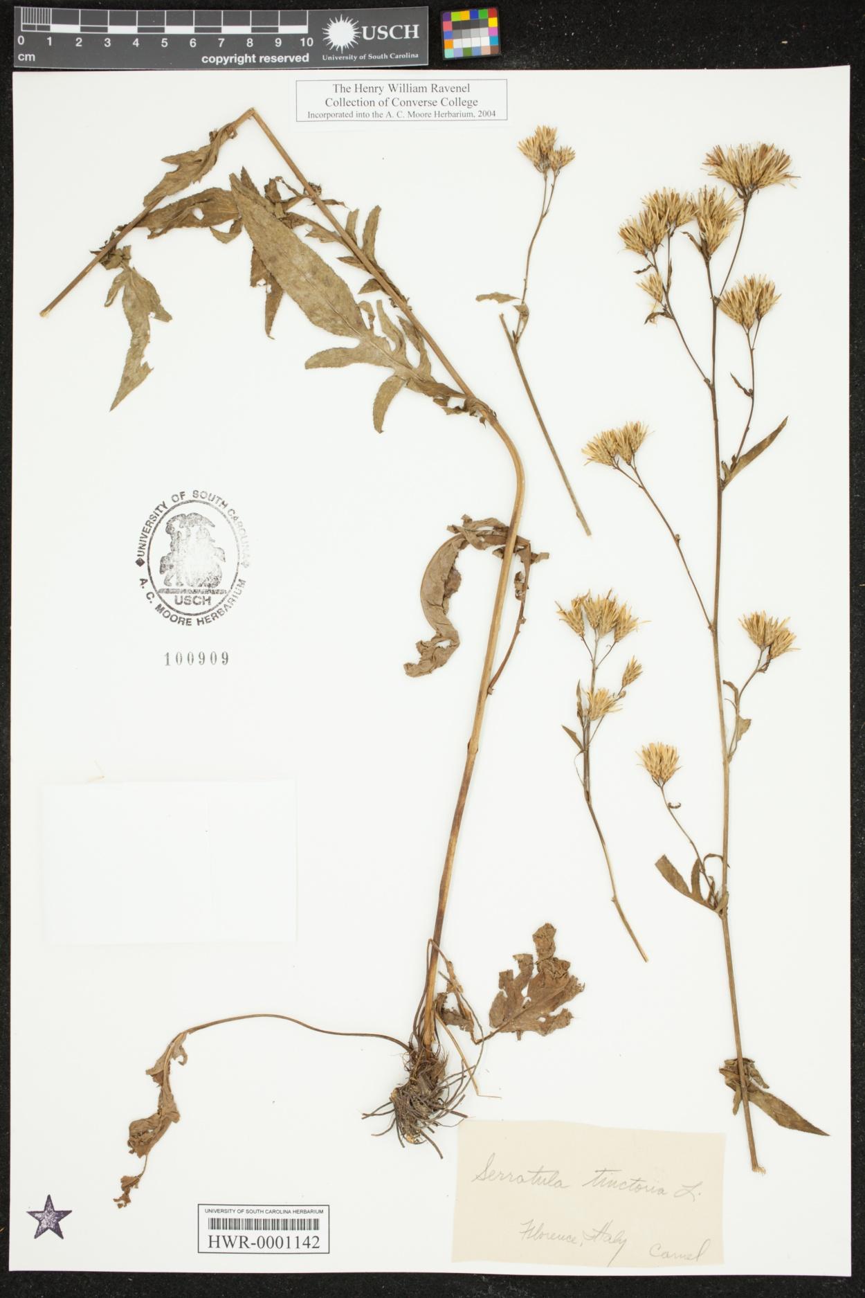 Serratula image
