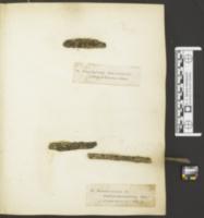 Unguiculariopsis ravenelii image