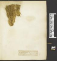Polyporus xanthus image