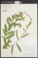 Herrickia wasatchensis image