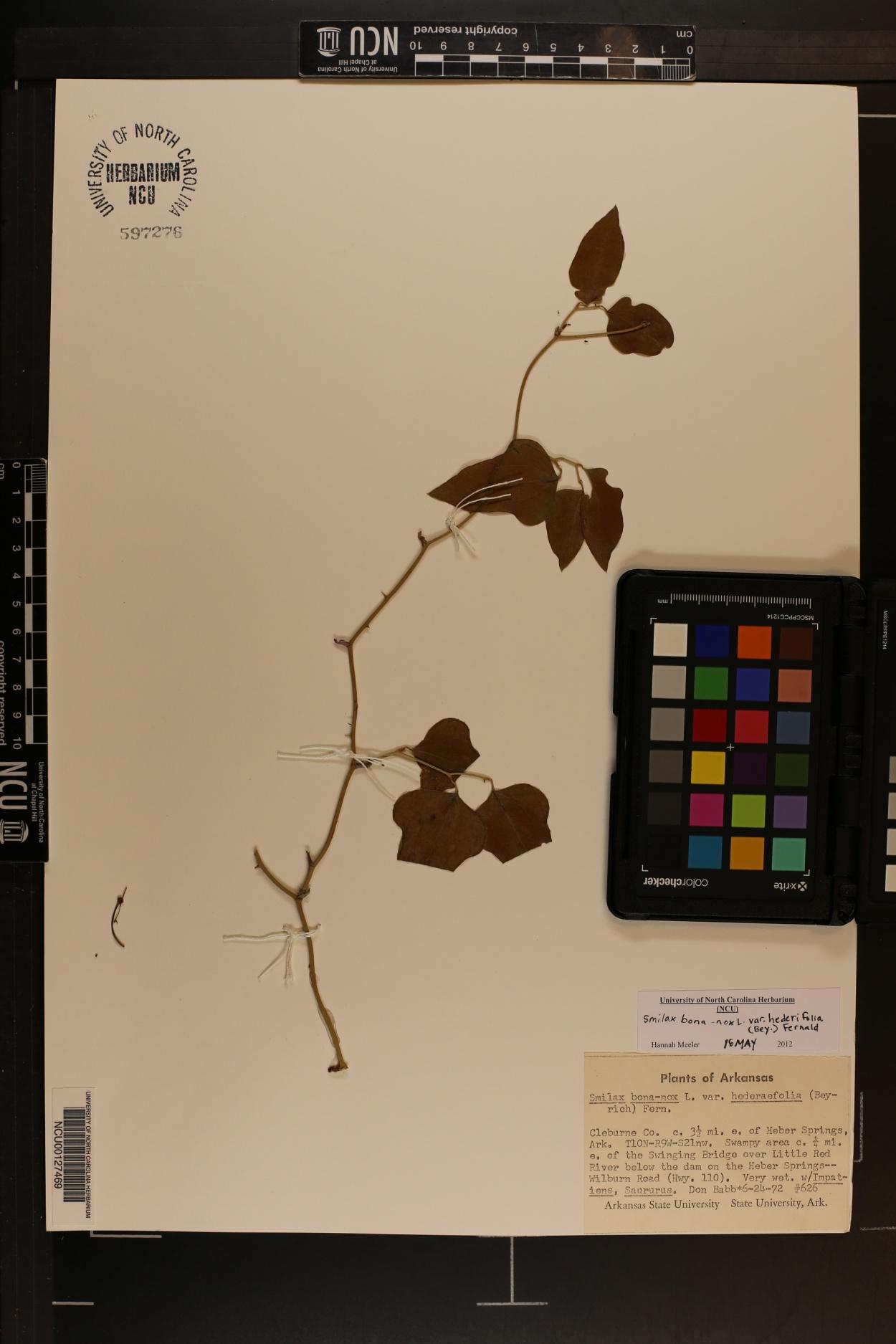 Smilax bona-nox var. hederifolia image