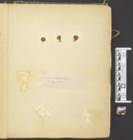 Agaricus parvulus image