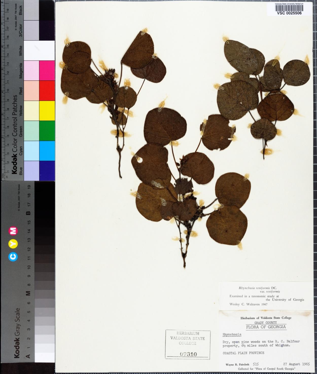 Rhynchosia reniformis image