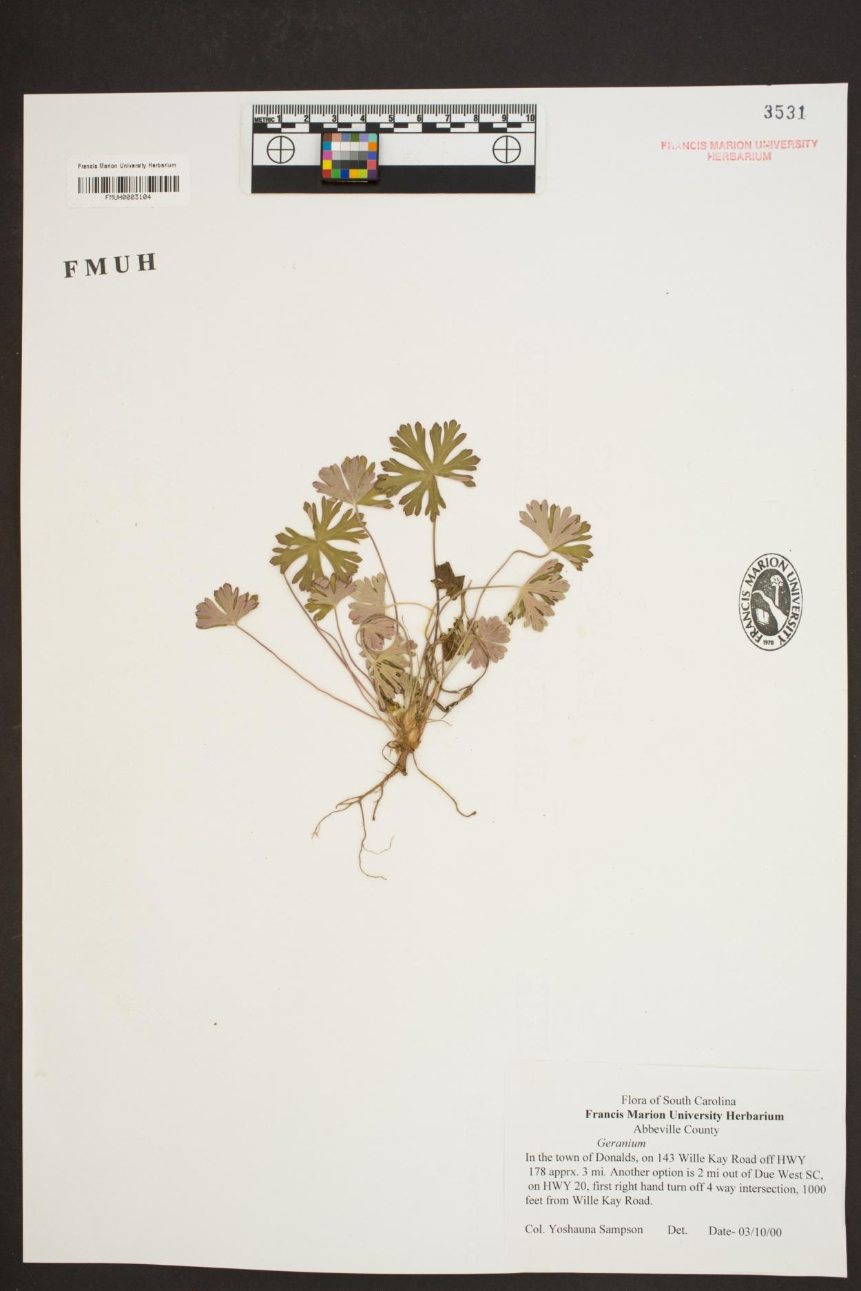 Geranium image